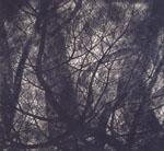 特別展: 船田玉樹 - 創造の森へ(ヒルサイドフォーラム)