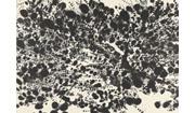 Takako Azami: Photosynthesis