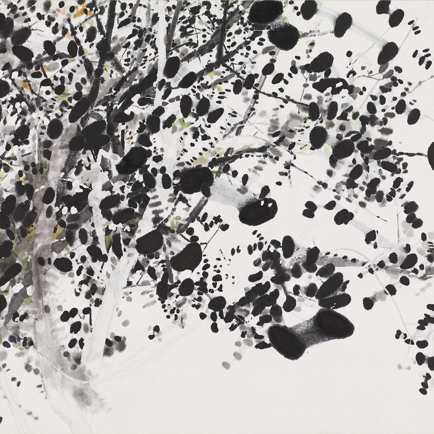 """Takako Azami's Solo Exhibition """"Photosyntheis"""""""